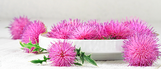Milk thistle may have role in metabolic syndrome